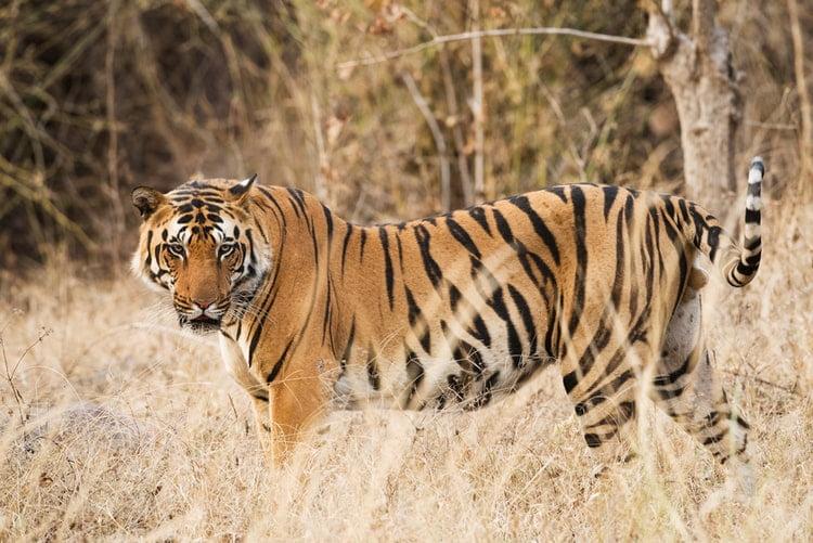 Kanha Kisli National Park, Kanha, India Vincent PH Zalinge