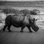 Anti-Poaching And The Darkness Behind The Fantasy